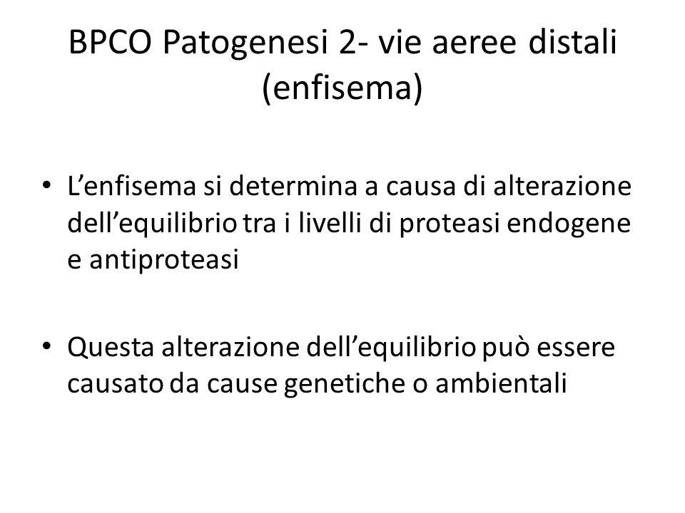 BPCO Patogenesi 2- vie aeree distali (enfisema) L'enfisema si determina a causa di alterazione dell'equilibrio tra i livelli di proteasi endogene e antiproteasi Questa alterazione dell'equilibrio può essere causato da cause genetiche o ambientali
