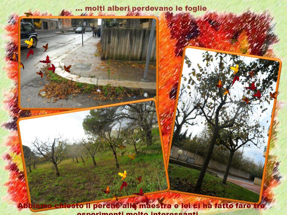 … molti alberi perdevano le foglie Abbiamo chiesto il perché alla maestra e lei ci ha fatto fare tre esperimenti molto interessanti…