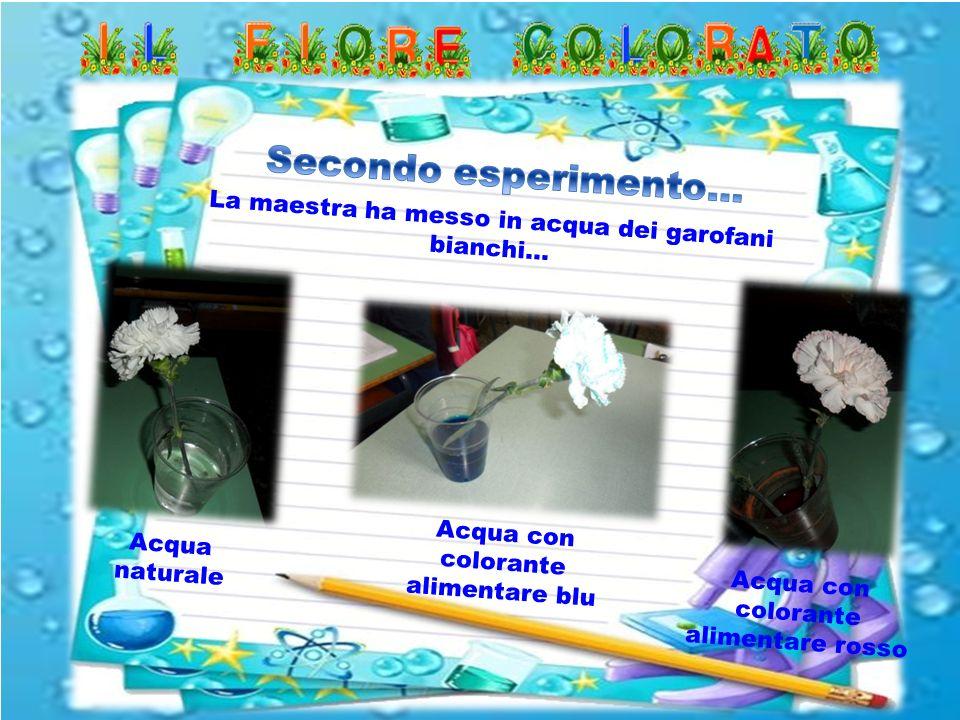 La maestra ha messo in acqua dei garofani bianchi… Acqua naturale Acqua con colorante alimentare blu Acqua con colorante alimentare rosso