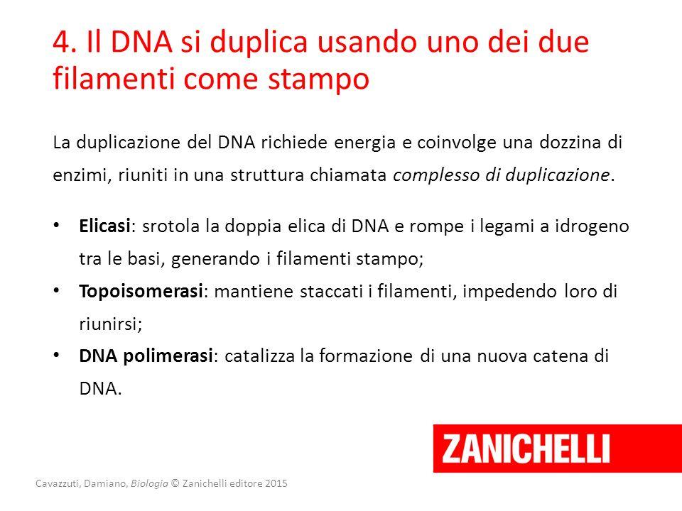 Cavazzuti, Damiano, Biologia © Zanichelli editore 2015 4. Il DNA si duplica usando uno dei due filamenti come stampo La duplicazione del DNA richiede