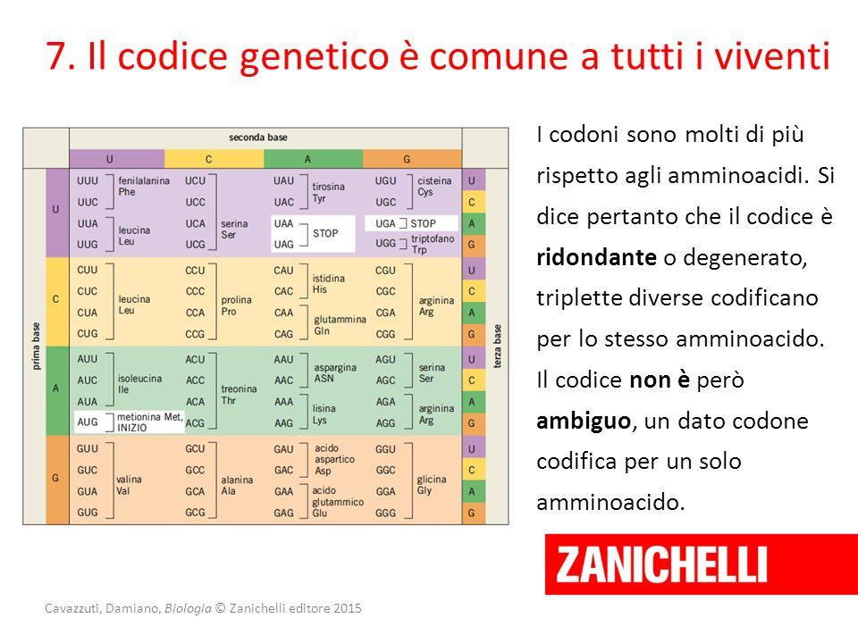 Cavazzuti, Damiano, Biologia © Zanichelli editore 2015 I codoni sono molti di più rispetto agli amminoacidi. Si dice pertanto che il codice è ridondan