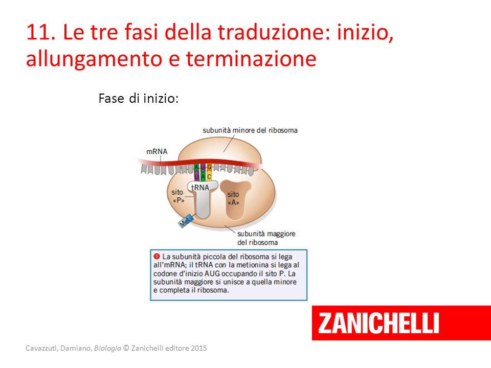Cavazzuti, Damiano, Biologia © Zanichelli editore 2015 11. Le tre fasi della traduzione: inizio, allungamento e terminazione Fase di inizio: