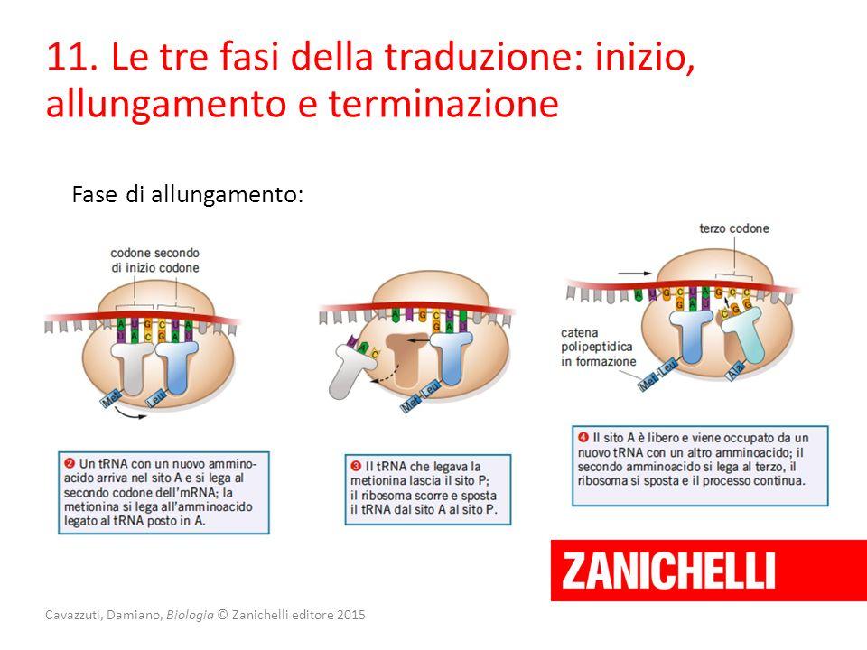 Cavazzuti, Damiano, Biologia © Zanichelli editore 2015 11. Le tre fasi della traduzione: inizio, allungamento e terminazione Fase di allungamento:
