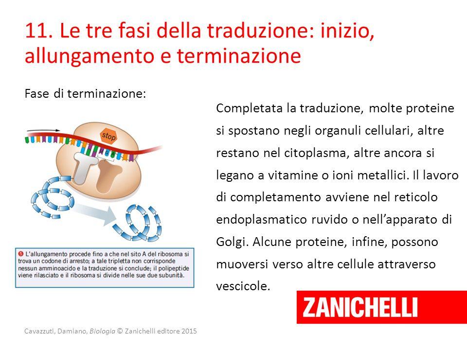 Cavazzuti, Damiano, Biologia © Zanichelli editore 2015 Fase di terminazione: 11. Le tre fasi della traduzione: inizio, allungamento e terminazione Com