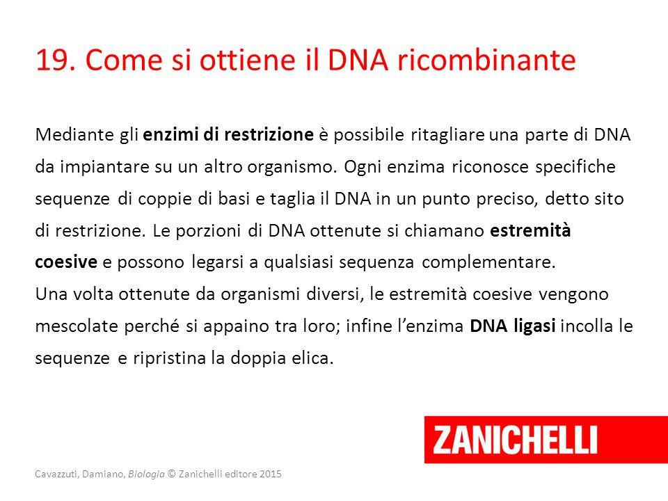 Cavazzuti, Damiano, Biologia © Zanichelli editore 2015 19. Come si ottiene il DNA ricombinante Mediante gli enzimi di restrizione è possibile ritaglia