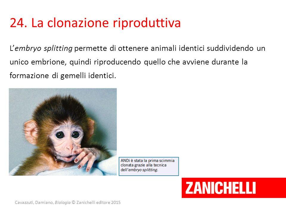 Cavazzuti, Damiano, Biologia © Zanichelli editore 2015 24. La clonazione riproduttiva L'embryo splitting permette di ottenere animali identici suddivi