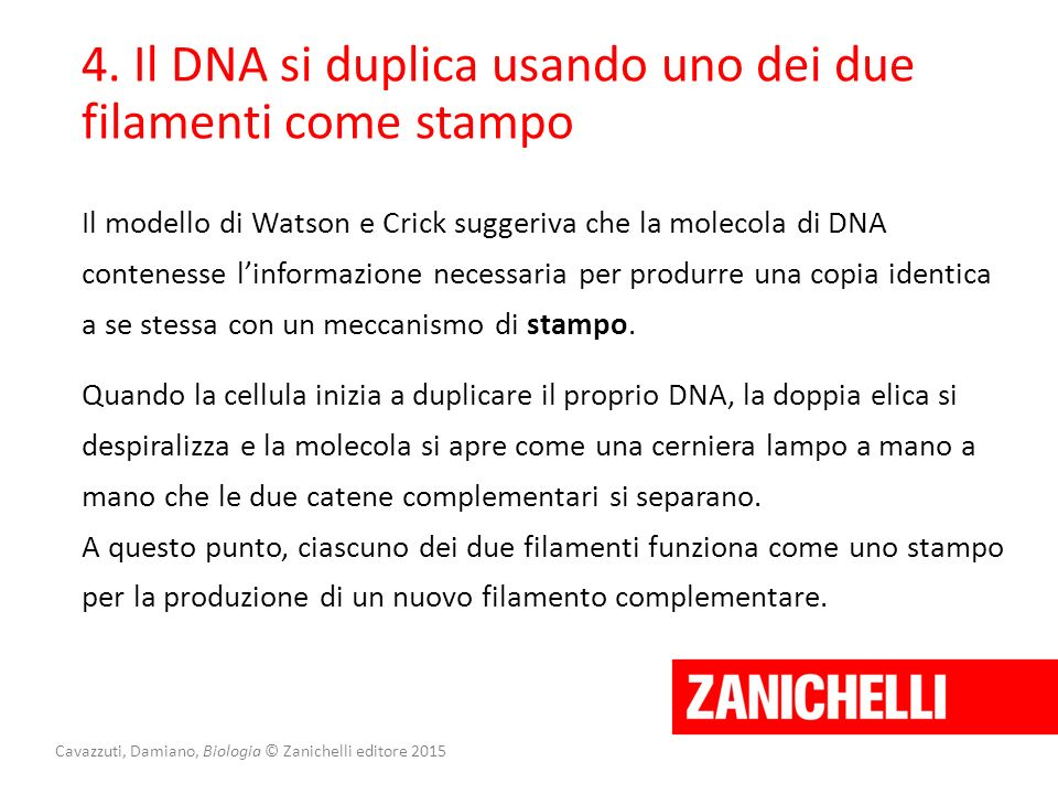 Cavazzuti, Damiano, Biologia © Zanichelli editore 2015 4. Il DNA si duplica usando uno dei due filamenti come stampo Il modello di Watson e Crick sugg
