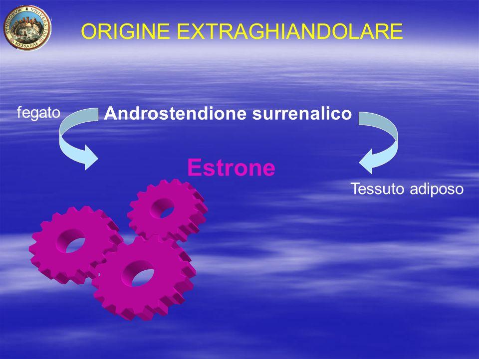 ORIGINE EXTRAGHIANDOLARE Androstendione surrenalico Estrone fegato Tessuto adiposo
