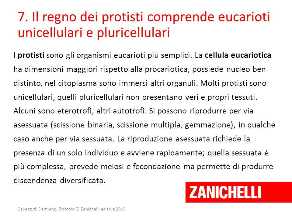 7. Il regno dei protisti comprende eucarioti unicellulari e pluricellulari I protisti sono gli organismi eucarioti più semplici. La cellula eucariotic