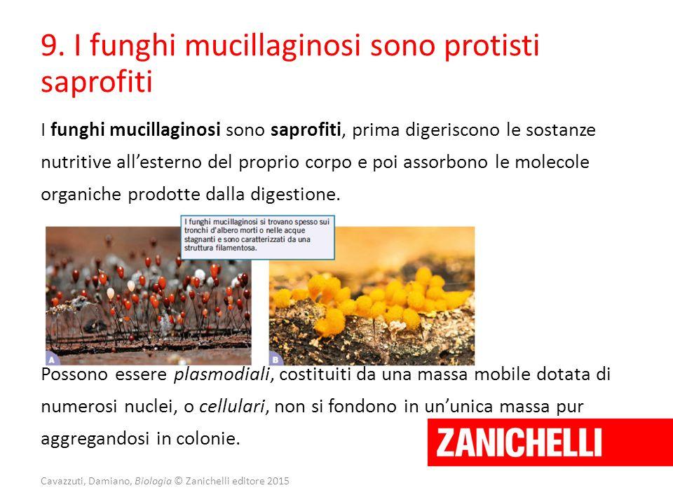Cavazzuti, Damiano, Biologia © Zanichelli editore 2015 9. I funghi mucillaginosi sono protisti saprofiti I funghi mucillaginosi sono saprofiti, prima