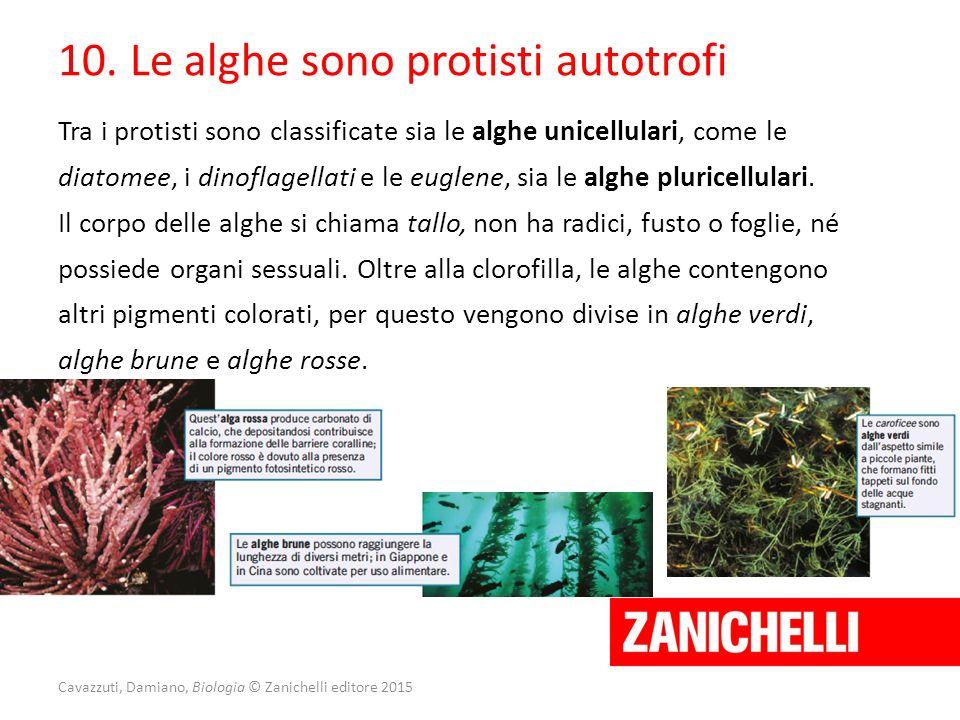 Cavazzuti, Damiano, Biologia © Zanichelli editore 2015 10. Le alghe sono protisti autotrofi Tra i protisti sono classificate sia le alghe unicellulari