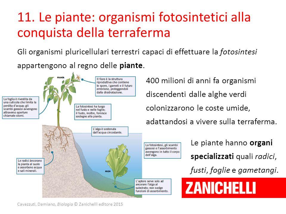 11. Le piante: organismi fotosintetici alla conquista della terraferma Gli organismi pluricellulari terrestri capaci di effettuare la fotosintesi appa