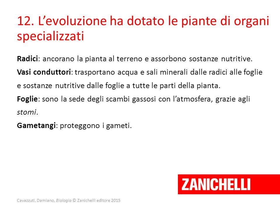 Cavazzuti, Damiano, Biologia © Zanichelli editore 2015 12. L'evoluzione ha dotato le piante di organi specializzati Radici: ancorano la pianta al terr