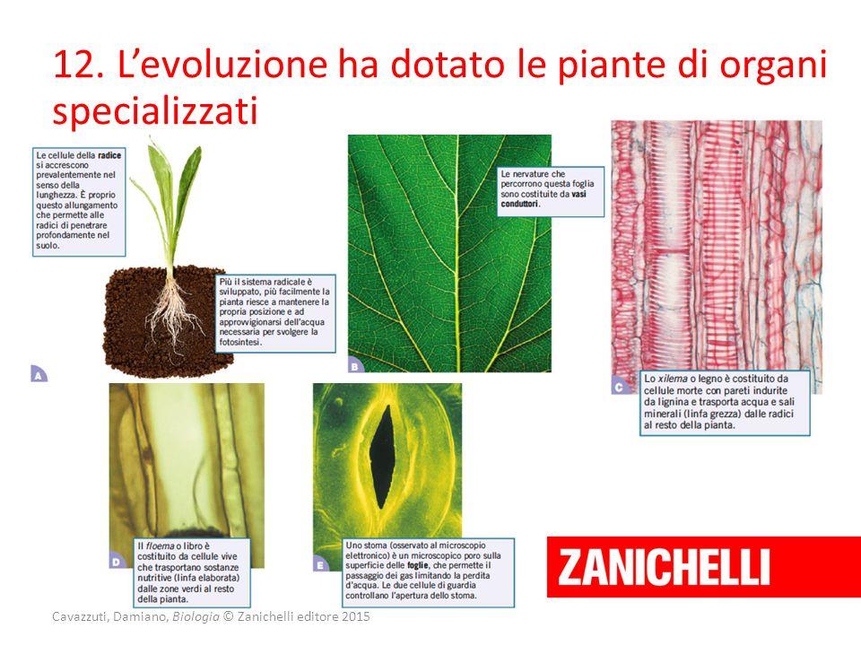 Cavazzuti, Damiano, Biologia © Zanichelli editore 2015 12. L'evoluzione ha dotato le piante di organi specializzati