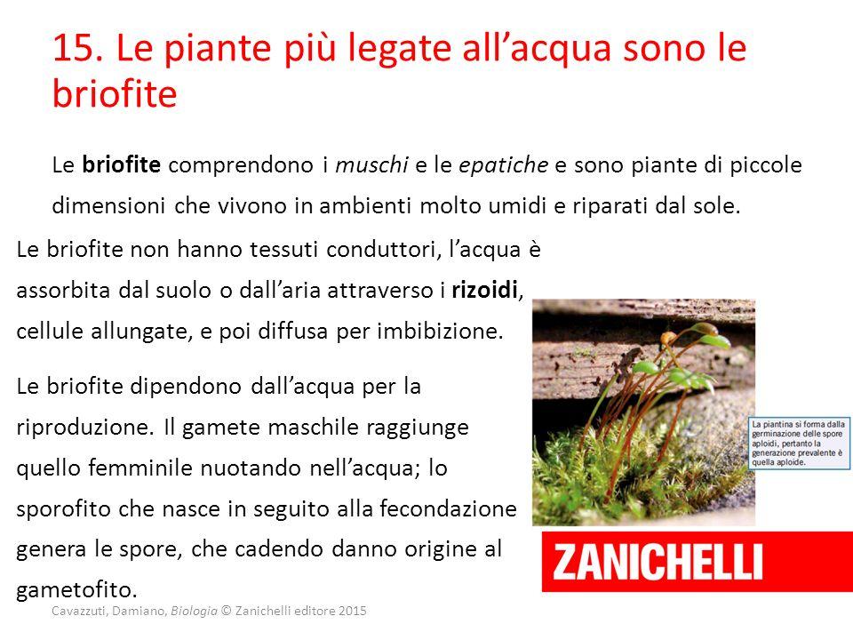 15. Le piante più legate all'acqua sono le briofite Le briofite comprendono i muschi e le epatiche e sono piante di piccole dimensioni che vivono in a