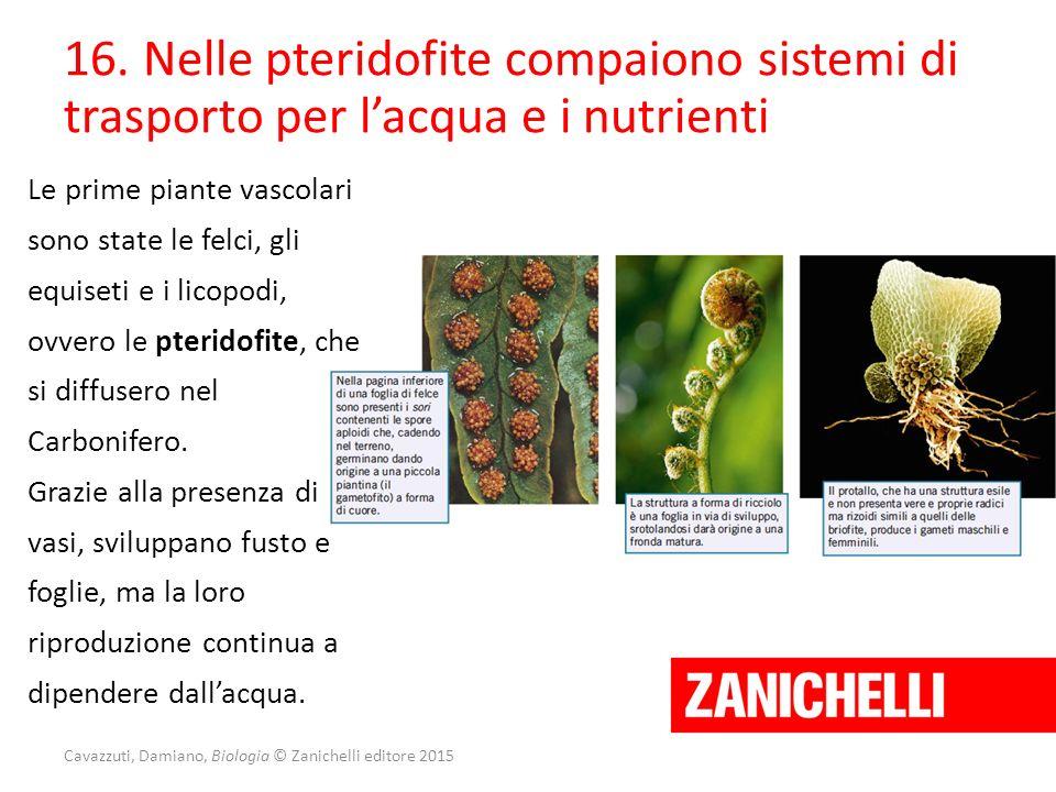 Cavazzuti, Damiano, Biologia © Zanichelli editore 2015 16. Nelle pteridofite compaiono sistemi di trasporto per l'acqua e i nutrienti Le prime piante