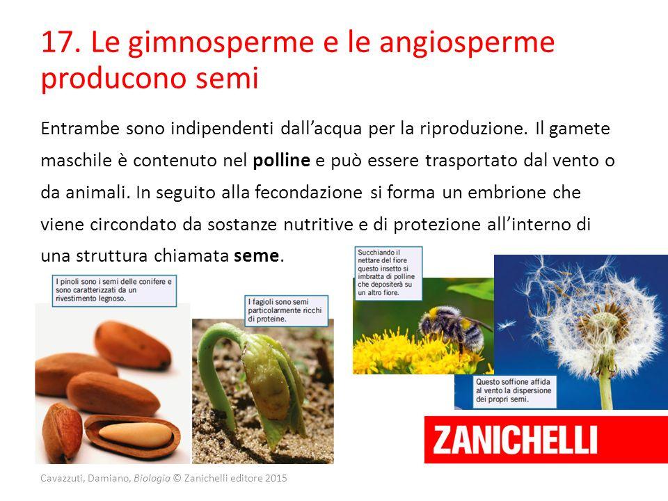 17. Le gimnosperme e le angiosperme producono semi Entrambe sono indipendenti dall'acqua per la riproduzione. Il gamete maschile è contenuto nel polli