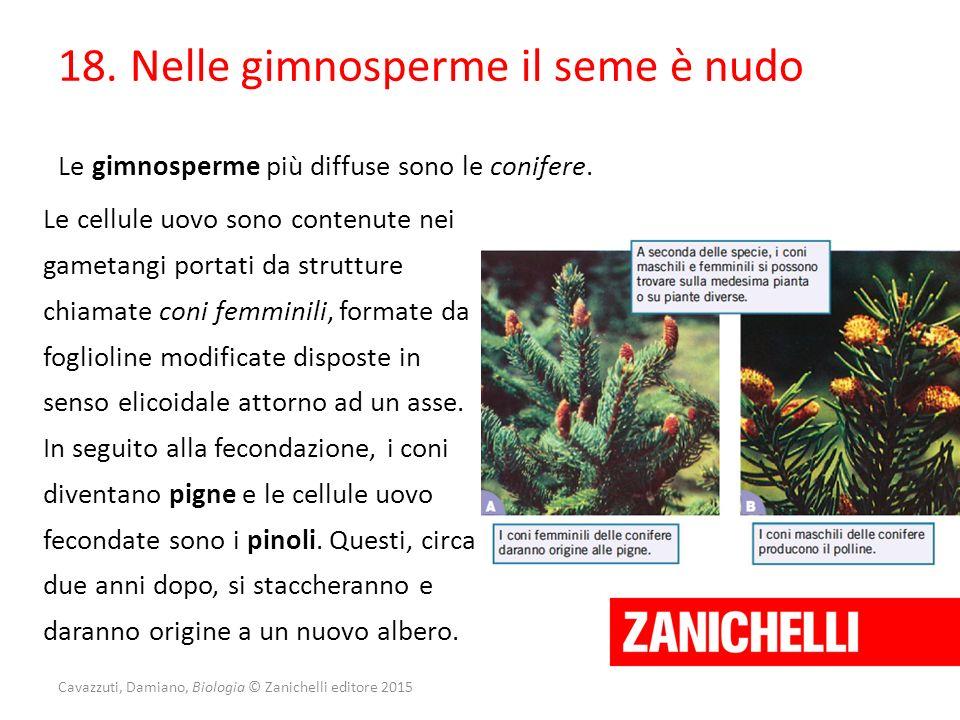 Cavazzuti, Damiano, Biologia © Zanichelli editore 2015 18. Nelle gimnosperme il seme è nudo Le gimnosperme più diffuse sono le conifere. Le cellule uo