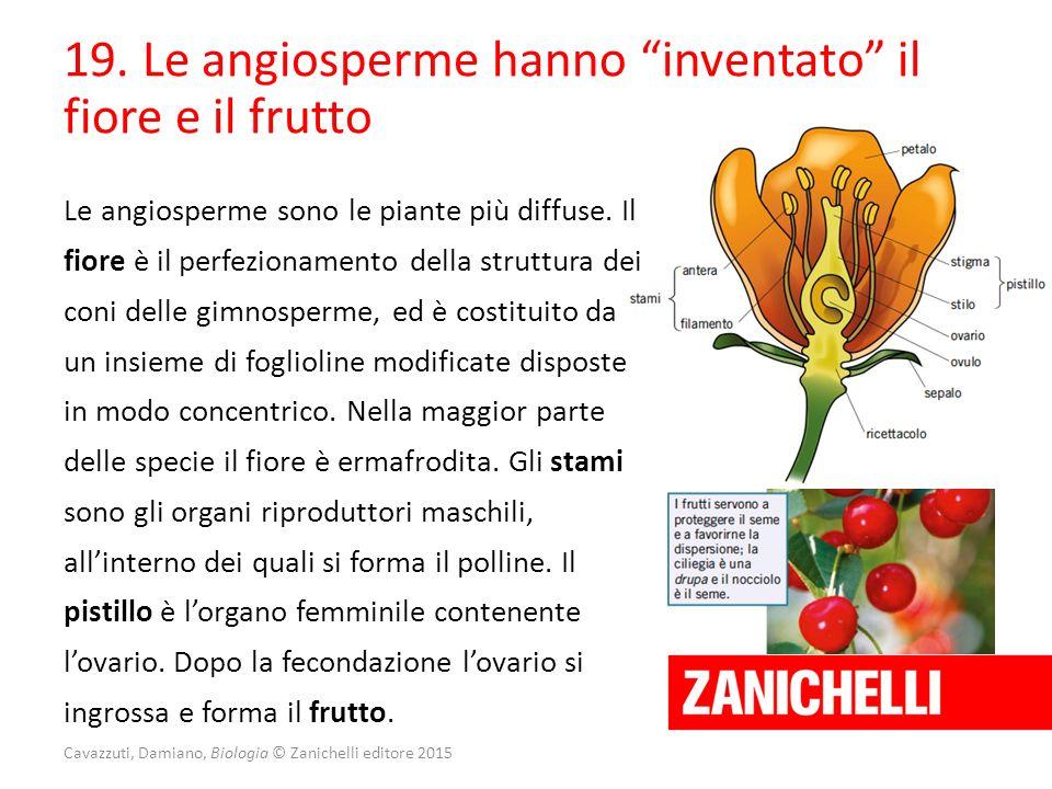 """Cavazzuti, Damiano, Biologia © Zanichelli editore 2015 19. Le angiosperme hanno """"inventato"""" il fiore e il frutto Le angiosperme sono le piante più dif"""