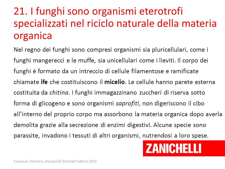 21. I funghi sono organismi eterotrofi specializzati nel riciclo naturale della materia organica Nel regno dei funghi sono compresi organismi sia plur