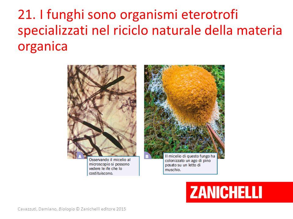 Cavazzuti, Damiano, Biologia © Zanichelli editore 2015 21. I funghi sono organismi eterotrofi specializzati nel riciclo naturale della materia organic