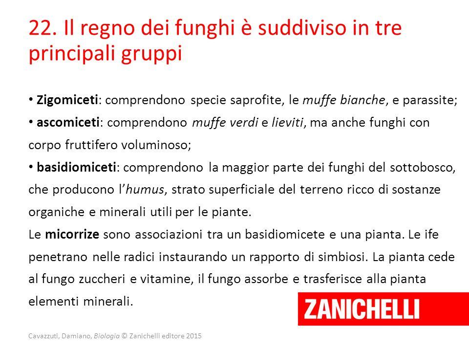 Cavazzuti, Damiano, Biologia © Zanichelli editore 2015 22. Il regno dei funghi è suddiviso in tre principali gruppi Zigomiceti: comprendono specie sap