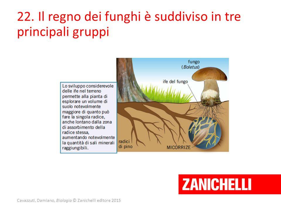 Cavazzuti, Damiano, Biologia © Zanichelli editore 2015 22. Il regno dei funghi è suddiviso in tre principali gruppi