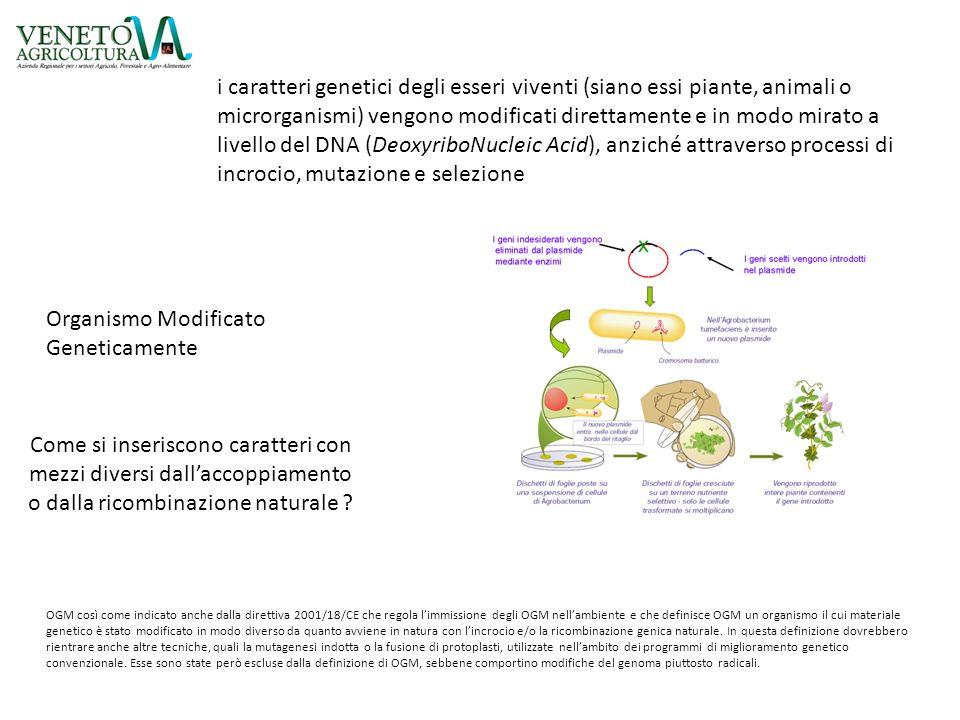 Organismo Modificato Geneticamente Come si inseriscono caratteri con mezzi diversi dall'accoppiamento o dalla ricombinazione naturale ? i caratteri ge