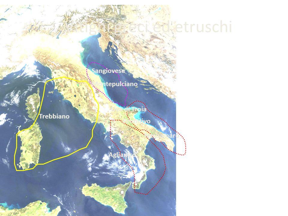 Vitigni greci ed etruschi Trebbiano Sangiovese Montepulciano Uva di Troia Primitivo Neroamaro Aglianico