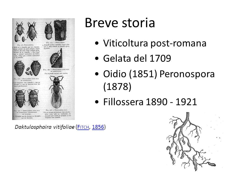 Breve storia Viticoltura post-romana Gelata del 1709 Oidio (1851) Peronospora (1878) Fillossera 1890 - 1921 Daktulosphaira vitifoliae (F ITCH, 1856)F