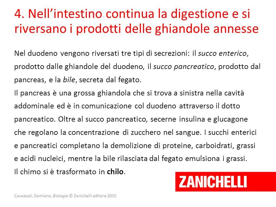 Cavazzuti, Damiano, Biologia © Zanichelli editore 2015 4. Nell'intestino continua la digestione e si riversano i prodotti delle ghiandole annesse Nel