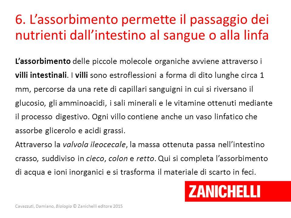 Cavazzuti, Damiano, Biologia © Zanichelli editore 2015 6. L'assorbimento permette il passaggio dei nutrienti dall'intestino al sangue o alla linfa L'a