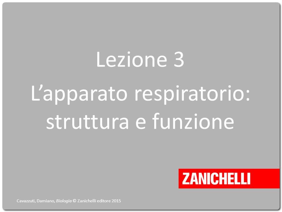 Lezione 3 L'apparato respiratorio: struttura e funzione Cavazzuti, Damiano, Biologia © Zanichelli editore 2015