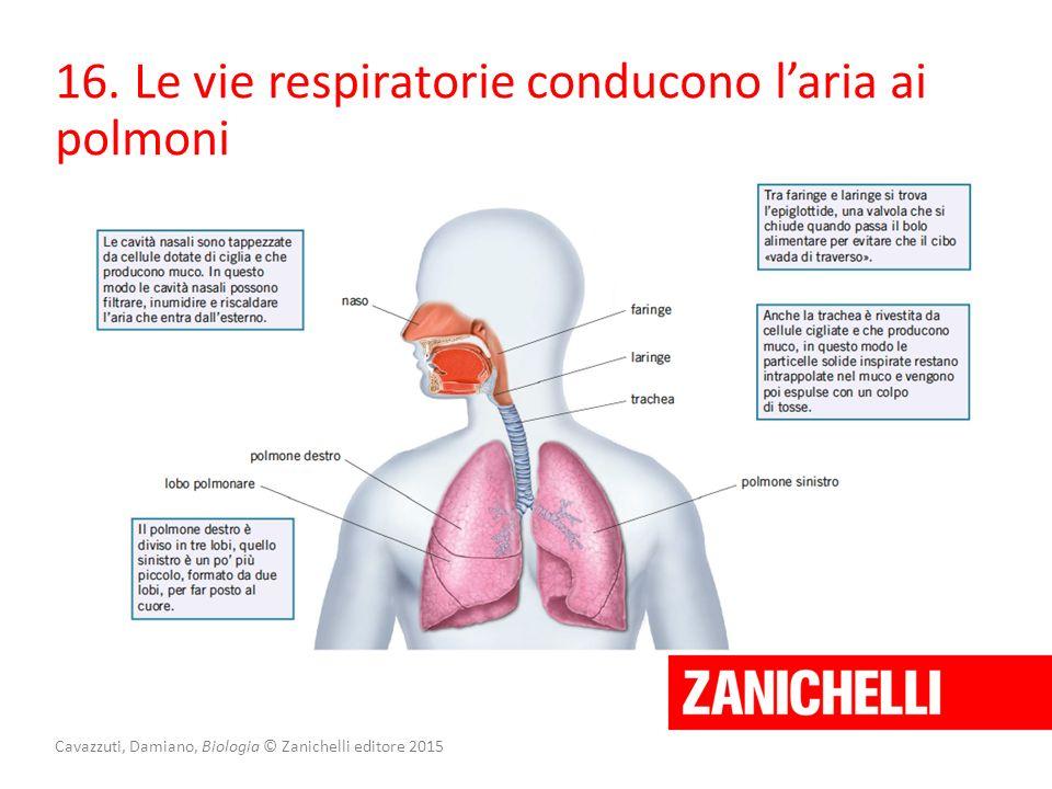 Cavazzuti, Damiano, Biologia © Zanichelli editore 2015 16. Le vie respiratorie conducono l'aria ai polmoni