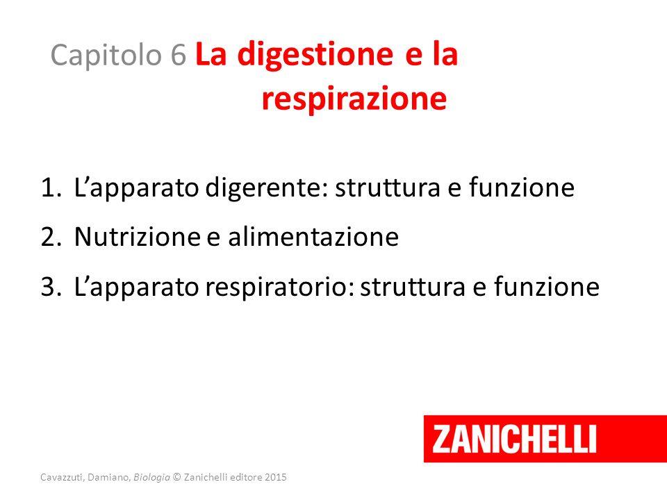 Capitolo 6 La digestione e la respirazione 1.L'apparato digerente: struttura e funzione 2.Nutrizione e alimentazione 3.L'apparato respiratorio: strutt