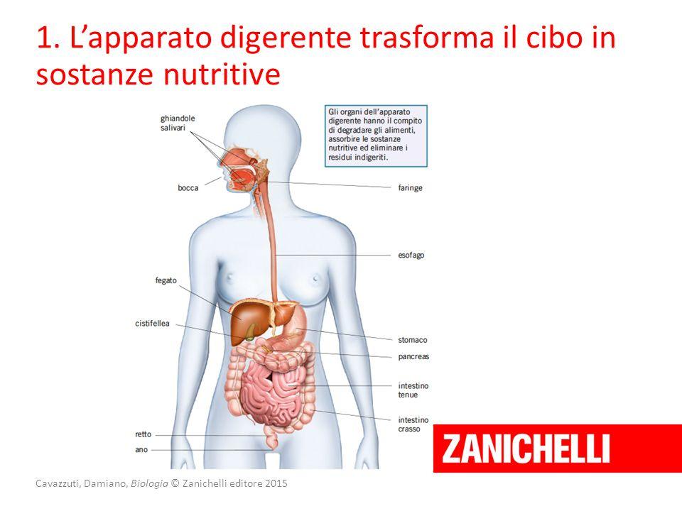 Cavazzuti, Damiano, Biologia © Zanichelli editore 2015 1. L'apparato digerente trasforma il cibo in sostanze nutritive