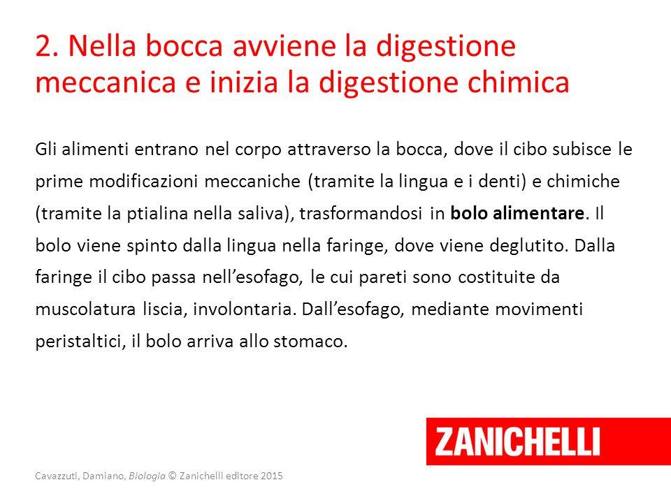 Cavazzuti, Damiano, Biologia © Zanichelli editore 2015 2. Nella bocca avviene la digestione meccanica e inizia la digestione chimica Gli alimenti entr