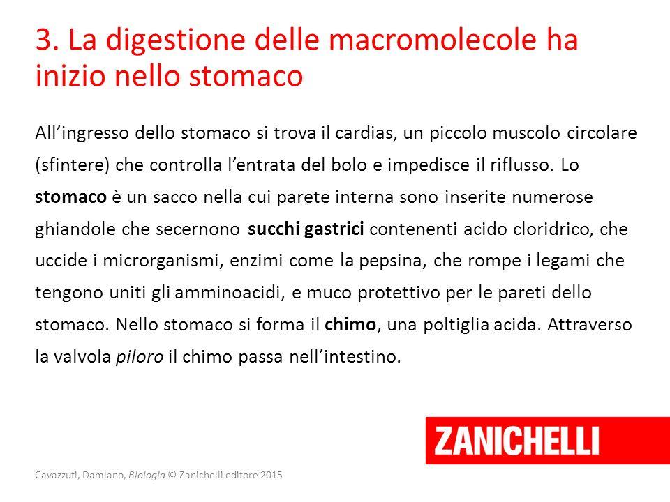 Cavazzuti, Damiano, Biologia © Zanichelli editore 2015 3. La digestione delle macromolecole ha inizio nello stomaco All'ingresso dello stomaco si trov