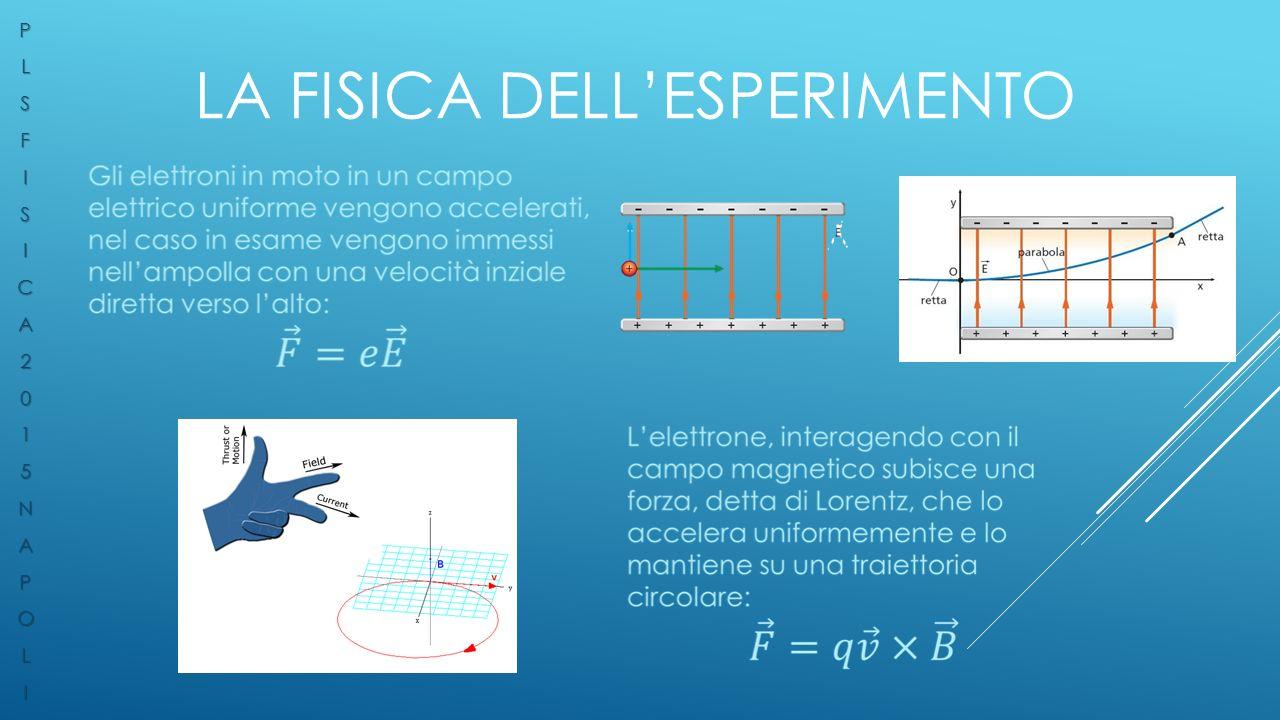 LA FISICA DELL'ESPERIMENTO PLSFISICA2015NAPOLI