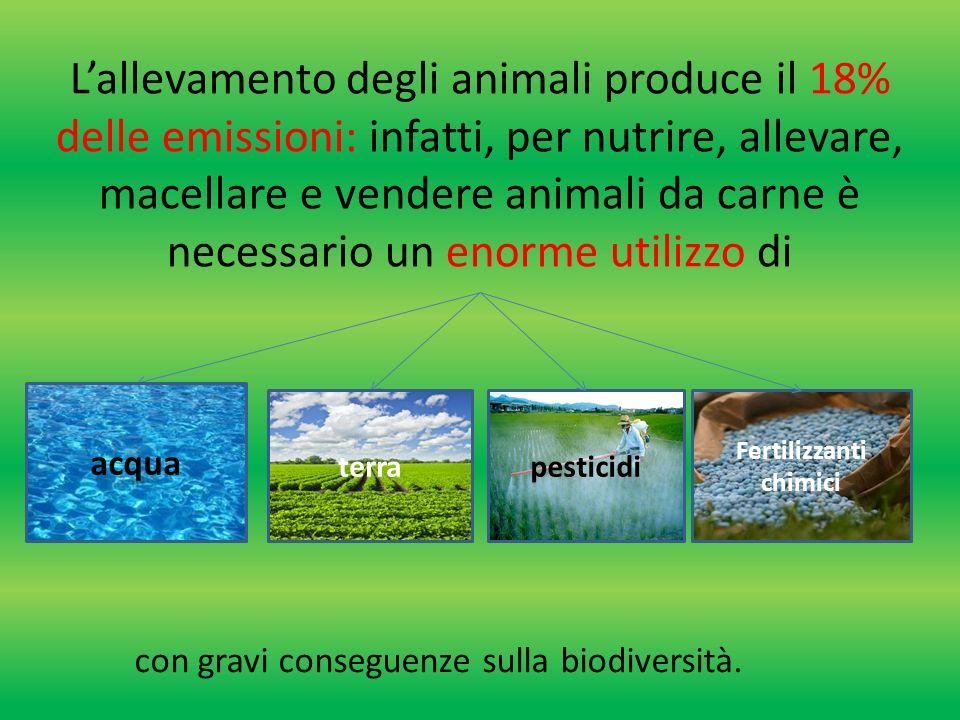 L'agricoltura è la maggiore responsabile della perdita di biodiversità e di scarsità idrica globale perché Superficie terrestre Usata per la coltivazione Acqua che consumiamo Usata per irrigare le coltivazioni