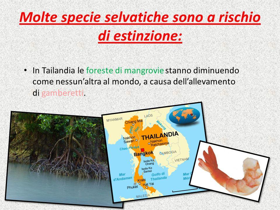 Molte specie selvatiche sono a rischio di estinzione: In Indonesia, Malesia, Amazzonia e nel Cerrado vaste aree di foresta vengono distrutte per produrre olio di palma, caffè o soia.