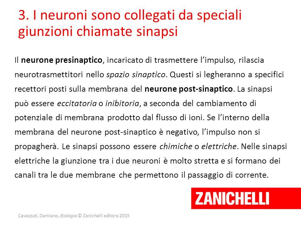 Cavazzuti, Damiano, Biologia © Zanichelli editore 2015 3. I neuroni sono collegati da speciali giunzioni chiamate sinapsi Il neurone presinaptico, inc