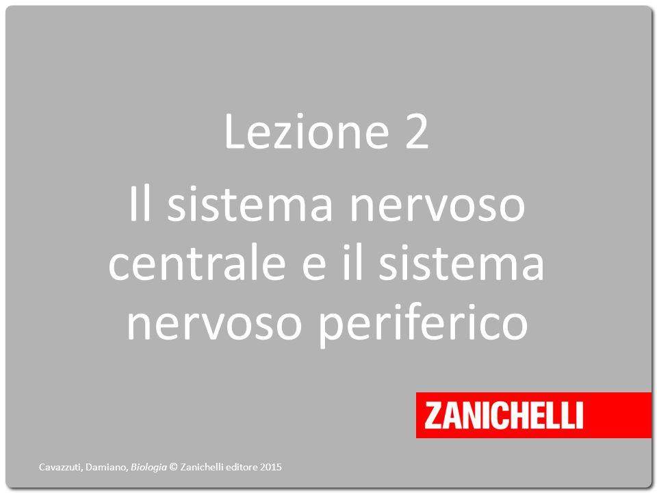 Lezione 2 Il sistema nervoso centrale e il sistema nervoso periferico Cavazzuti, Damiano, Biologia © Zanichelli editore 2015