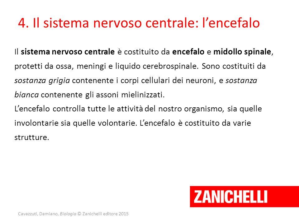 4. Il sistema nervoso centrale: l'encefalo Il sistema nervoso centrale è costituito da encefalo e midollo spinale, protetti da ossa, meningi e liquido