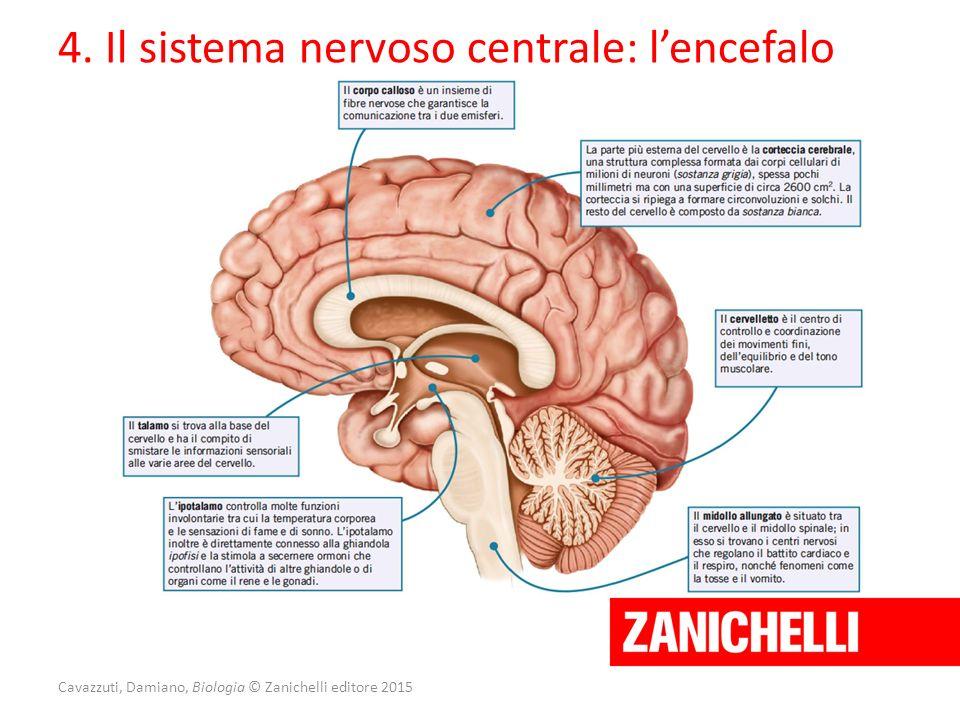 Cavazzuti, Damiano, Biologia © Zanichelli editore 2015 4. Il sistema nervoso centrale: l'encefalo