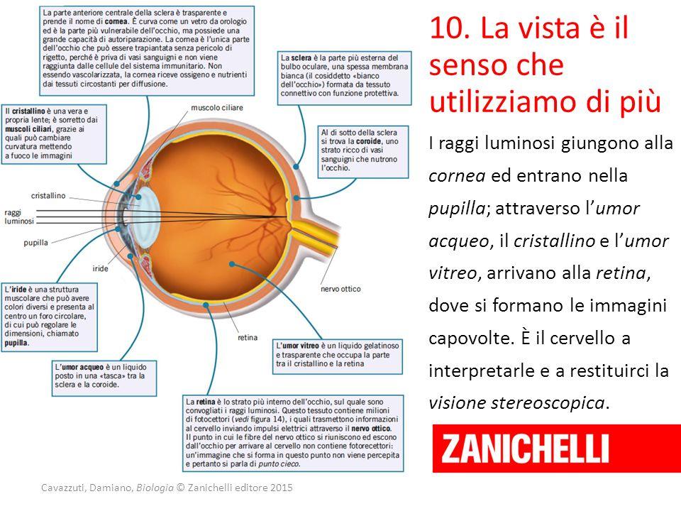 Cavazzuti, Damiano, Biologia © Zanichelli editore 2015 10. La vista è il senso che utilizziamo di più I raggi luminosi giungono alla cornea ed entrano
