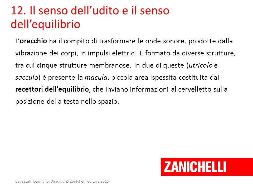 Cavazzuti, Damiano, Biologia © Zanichelli editore 2015 12. Il senso dell'udito e il senso dell'equilibrio L'orecchio ha il compito di trasformare le o