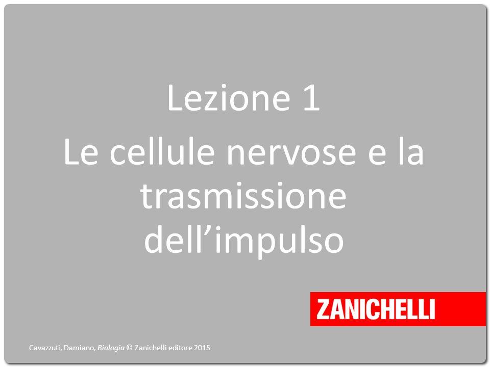 Lezione 1 Le cellule nervose e la trasmissione dell'impulso Cavazzuti, Damiano, Biologia © Zanichelli editore 2015