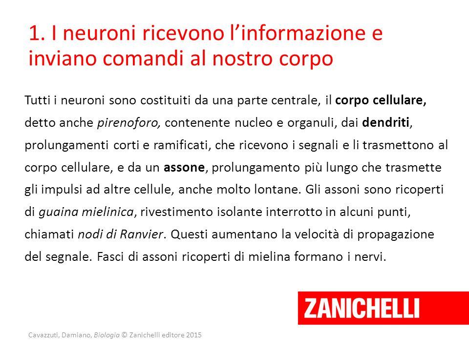 Cavazzuti, Damiano, Biologia © Zanichelli editore 2015 1. I neuroni ricevono l'informazione e inviano comandi al nostro corpo Tutti i neuroni sono cos