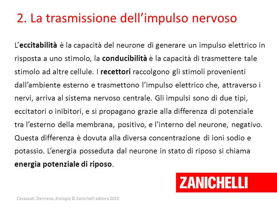 Cavazzuti, Damiano, Biologia © Zanichelli editore 2015 2. La trasmissione dell'impulso nervoso L'eccitabilità è la capacità del neurone di generare un
